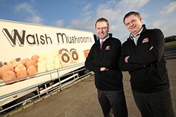 Walsh Mushrooms acquires Golden Mushrooms in positive move for Irish mushroom industry